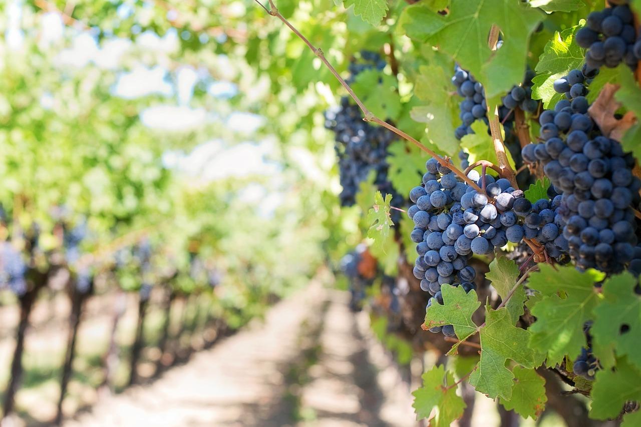 Am Rande des Schwarzwaldes das Weingut Zähringer